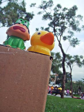 duck12